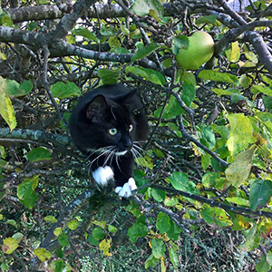 cat in a tree 300px