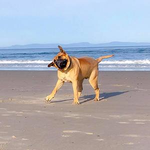 dog love 3 300px